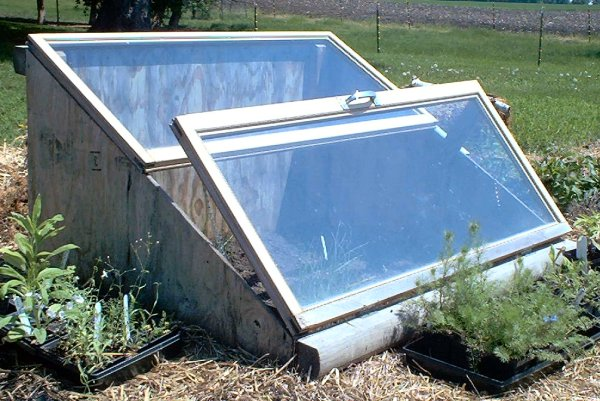 Build Cold Frame to Extend Your Growing Season