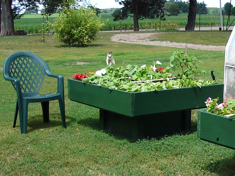 Square Foot Gardening Raised Boxes.